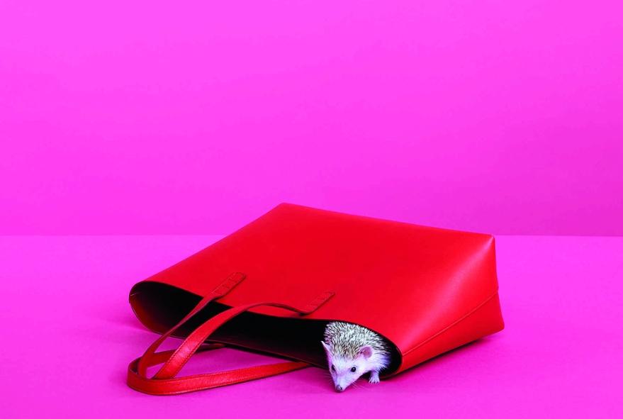 Mansur-Gavriel-Handbags-Spring-2015-Lookbook-6